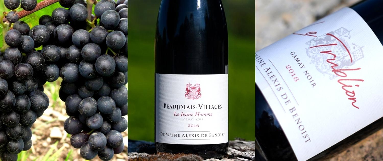 Triptyque vins rouges d'Alexis de Benoist